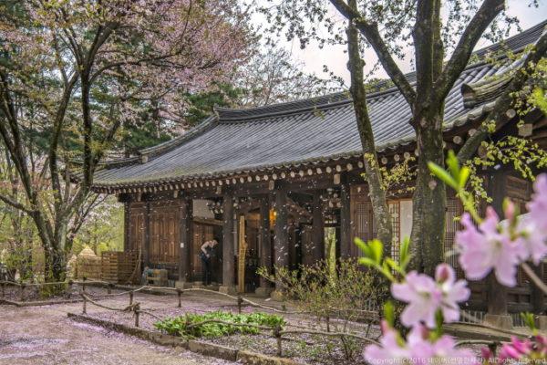 【韓國】首爾京畿道一日遊