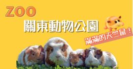 【日本】關東地區最夯動物公園!滿滿的天竺鼠發車中~