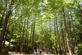 【日本】關東近郊旅遊—川崎市,超人氣熱門景點大人小孩都適合!