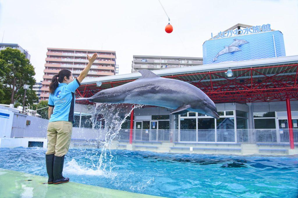 【日本】盤點東京都內水族館,情侶心目中排行第一名的約會勝地!