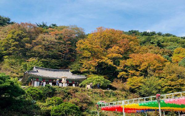 【韓國】釜山賞楓五日遊,每位只要台幣20000元起!