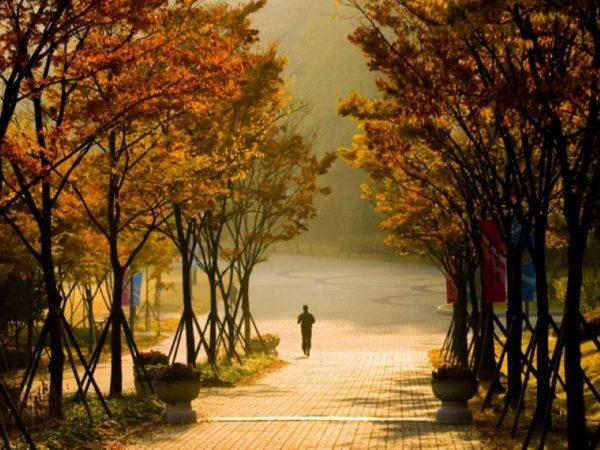 【韓國】釜山玩透透~一天郊區行程任您選,跟著中文司機上山下海,前往釜山最夯景點,每位只要台幣25000元起!