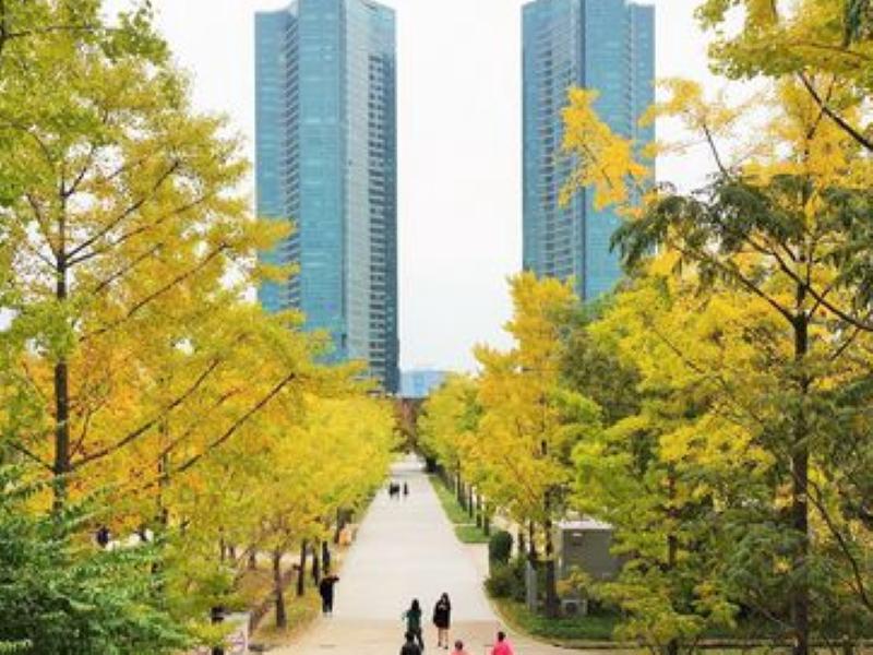 【韓國】首爾銀杏之秋五日包車遊,市區及近郊銀杏熱門景點、金黃色地毯相機停不下來!