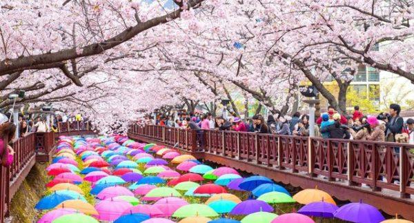 【韓國】鎮海軍港節-到海軍基地參加櫻花祭典!