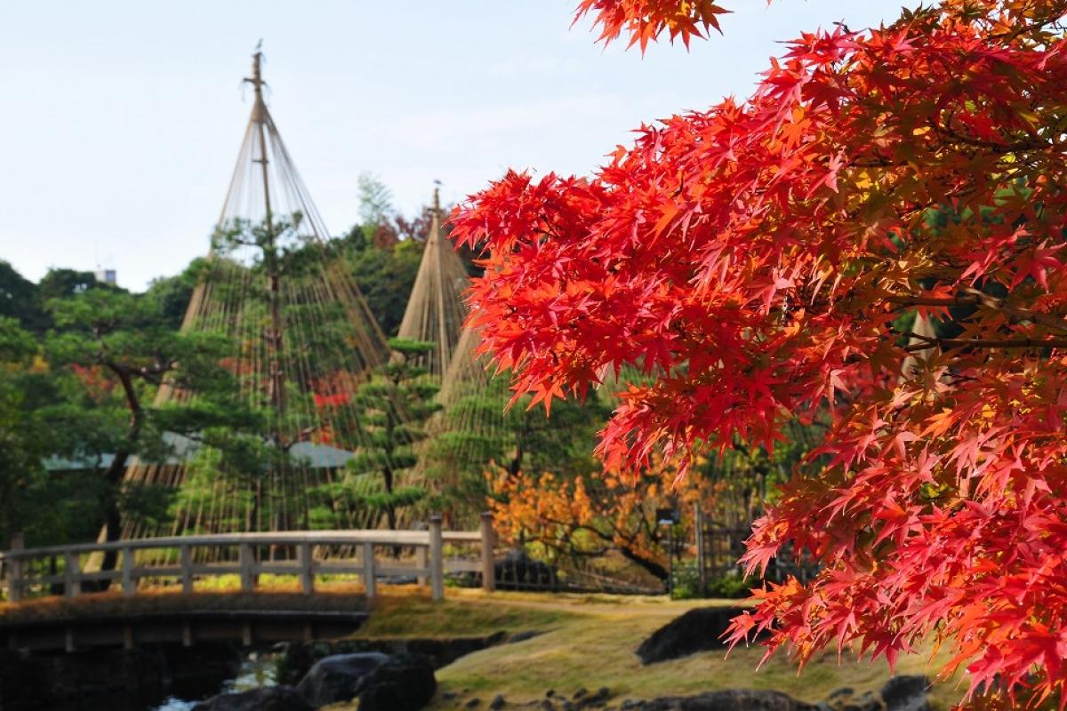 【日本】名古屋賞楓專案A——超值五日遊,每位只要台幣20000元起!