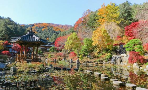 【韓國】首爾經典賞楓五日遊,在地中文司機帶您深度探索首爾賞楓美景,每位只要台幣20000元起!