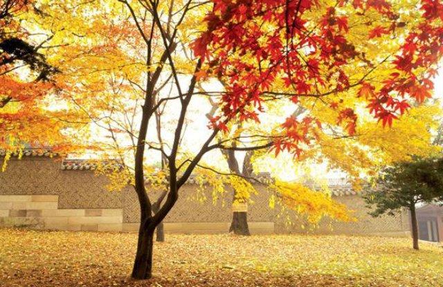 【韓國】秋季最浪漫之金黃色銀杏雨~各地秘境大搜集!