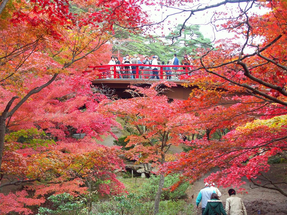 彌彥公園(紅葉谷)