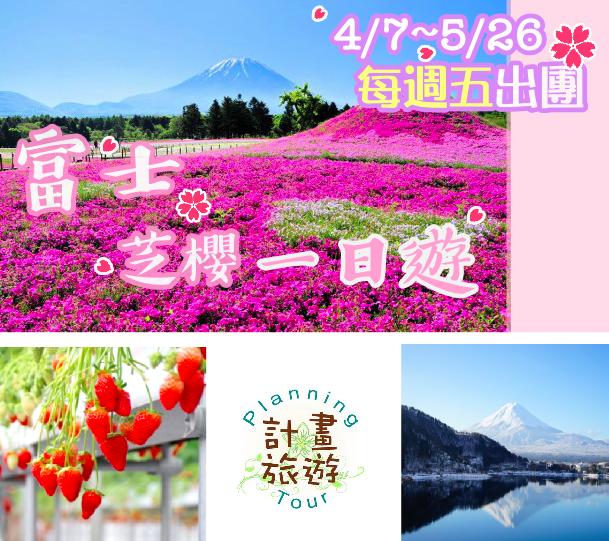 『2017併車活動』東京出發~中文司機帶您去富士山賞芝櫻+採草莓吃到飽+河口湖一日遊