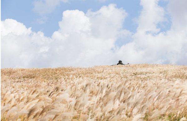 【韓國】濟州島之秋-山君不離,紫芒花海開遍山