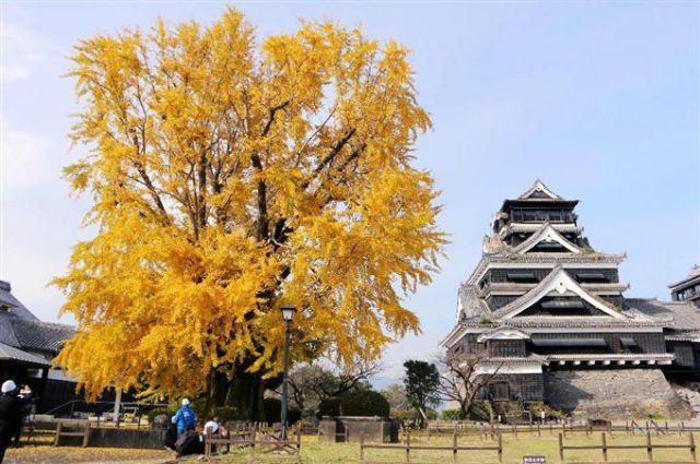 【日本】紅葉追尋日誌:九州熊本城篇